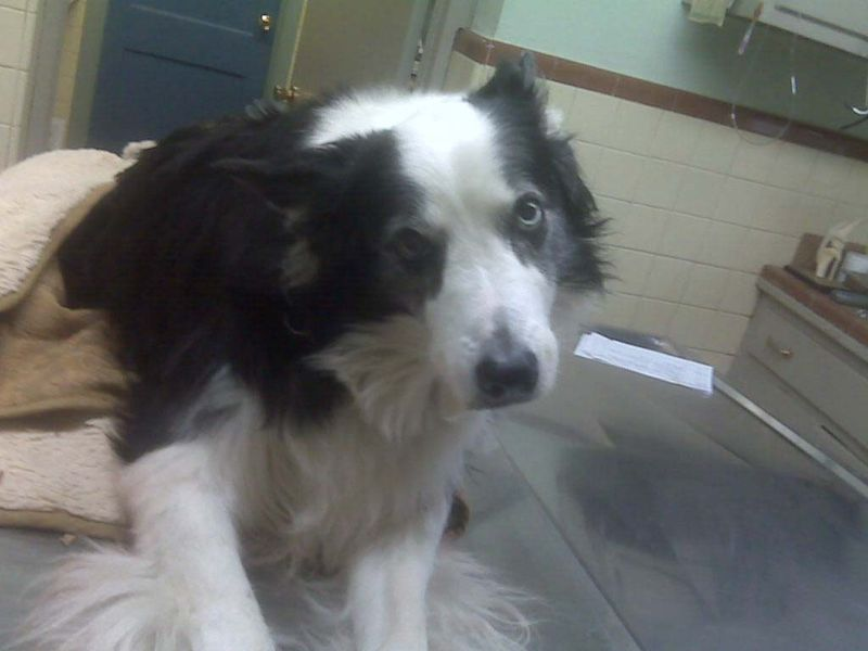 At the vet 12-09